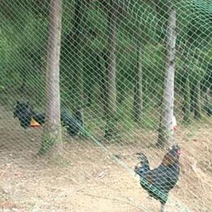 garden cage fence