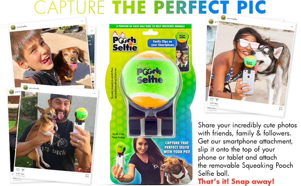 share on social media cute pet photos squeaking pooch selfie ball backyard beach outdoors indoors