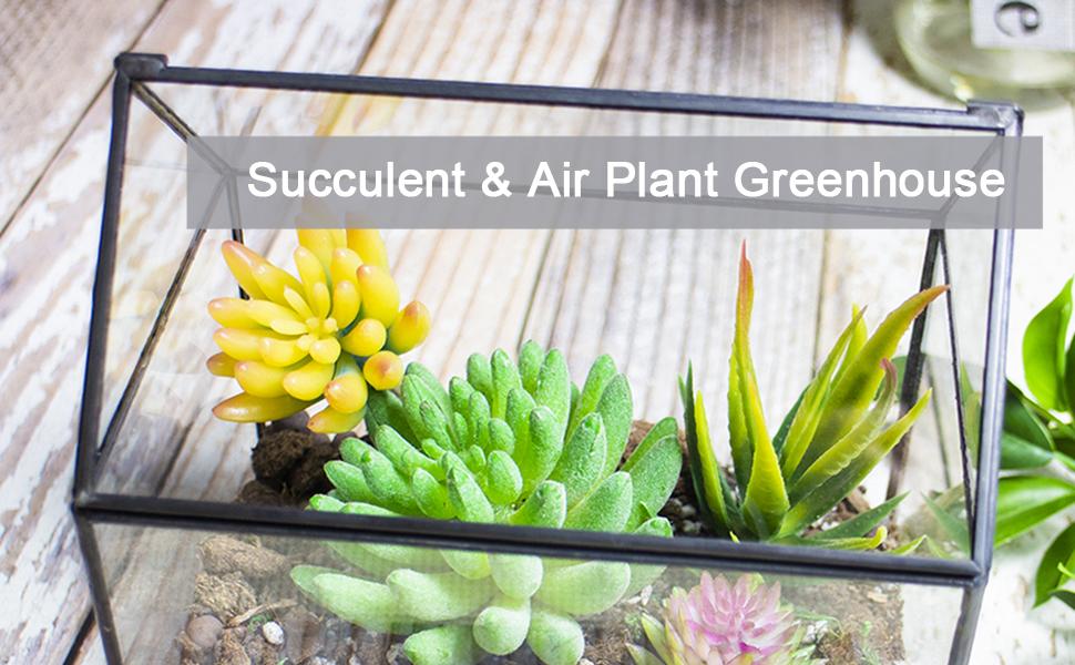 Succulent Plant Glass Terrarium