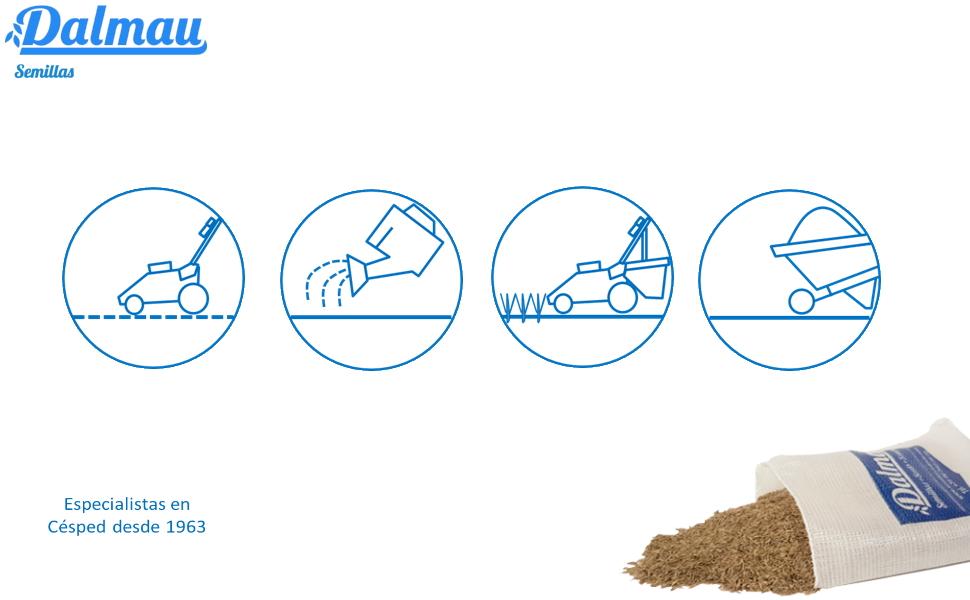 Semillas de Césped - MEZCLA SOL - 1 kg - Mezcla de céspedes, bajo ...