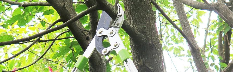 mesoga long reach tree trimming