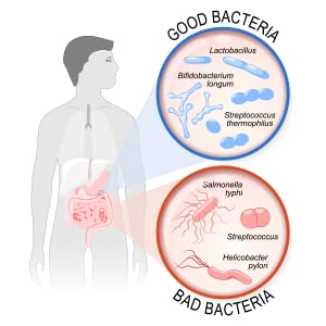 illustration of what good bacteria and bad bacteria look like in the body