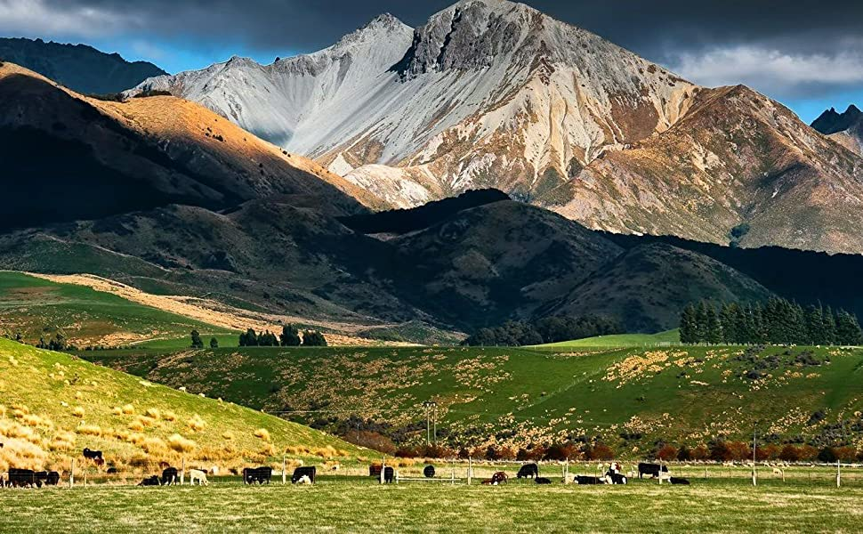 New Zealand Grass Fed MOFO