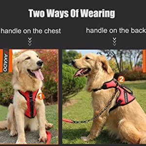how to wear dog ahrness