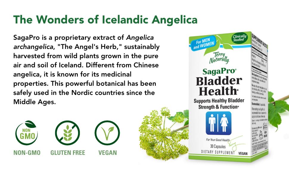 icelandic angelica, angel herb, wild plants, bladder health, bladder function