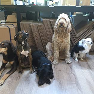 office dogs at memorial gallery