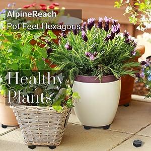 AlpineReach Pot Feet Hexagons Healthy Plants