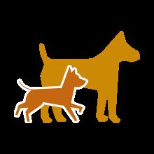 hundesitz für auto kleine hunde