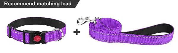 collar lead set  purple