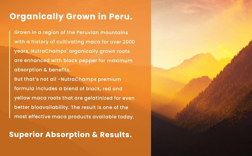 maca root from peru