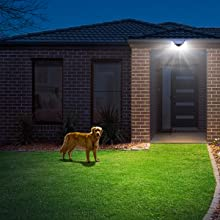 Outdoor Lighting for Your Lovely Pet