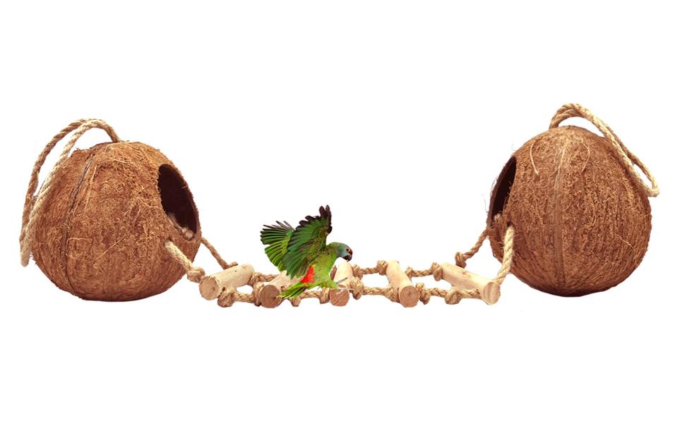 coconut bird shell