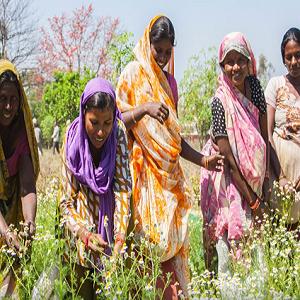 organic india vision tulsi herbs probiotic prebiotic psyllium husk powder health