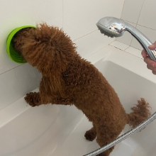 Treater Mat Dog Dog Washing Distraction Device