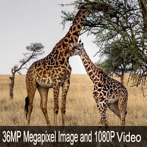 36 Megapixel Image and 1080P Video