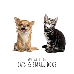 cats cat dogs dog
