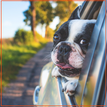 Calming Dog Travel