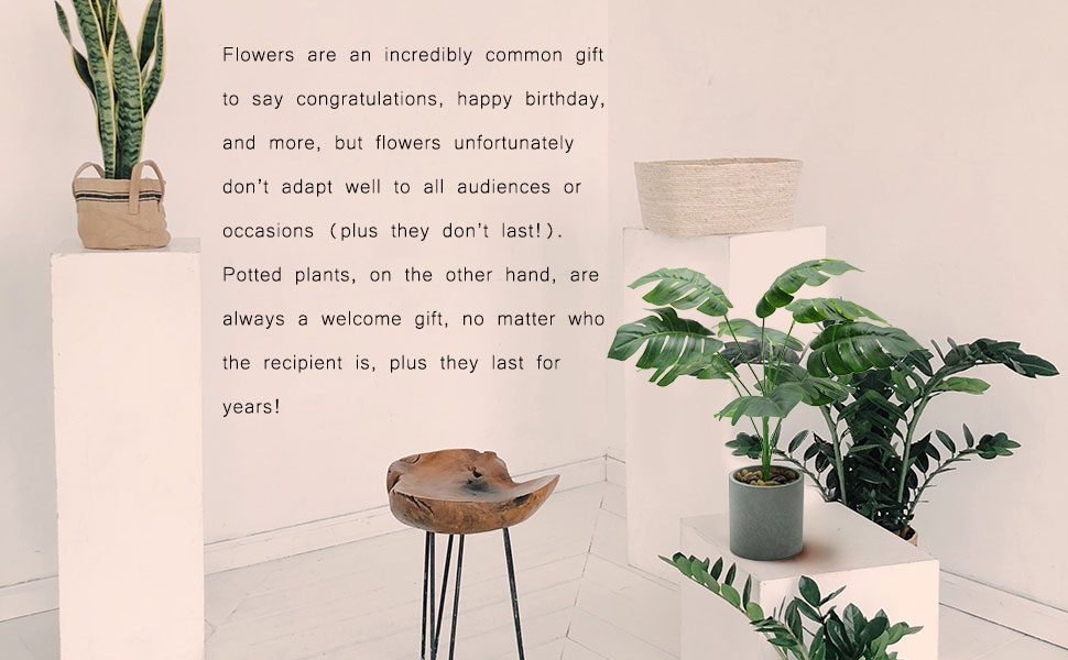 Flowers are an incredibly common gift to say congratulations, happy birthday, and more,