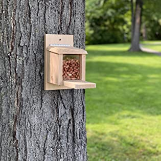 squirrel feeder peanuts munch box bird house home shelter animal wildlife outdoor outside backyard