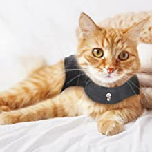 thundershirt cat calming shirt