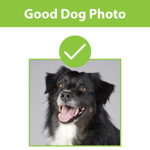 Example of a good dog photo