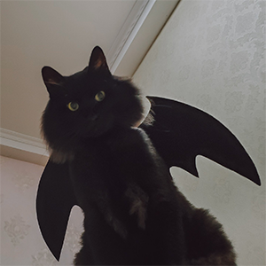 A cat wearing the bat wings.