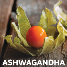 Ashwagandha for Adrenal Health & Cortisol Support