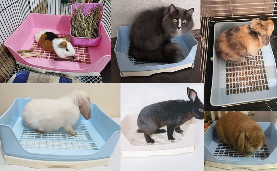 Guinea pigs litter pan