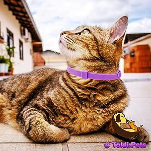 Toldi dog cat flea tick lice collar treatment prevention spot on medium large small serestro collars