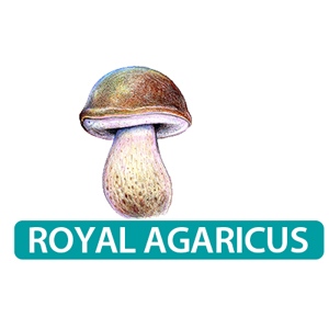 royal sun agaricus