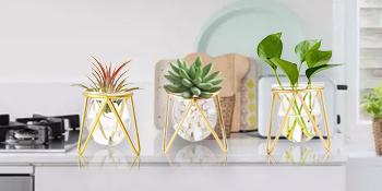succulent plants in pots