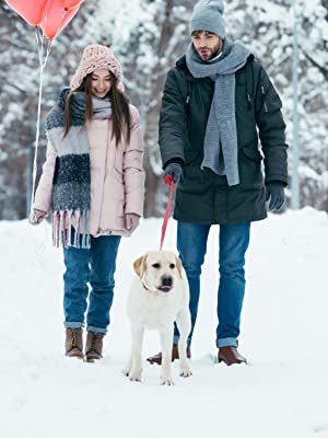 Couple with dog casually walking in the snow