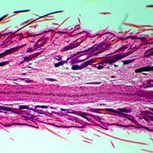 Skin under the microscope