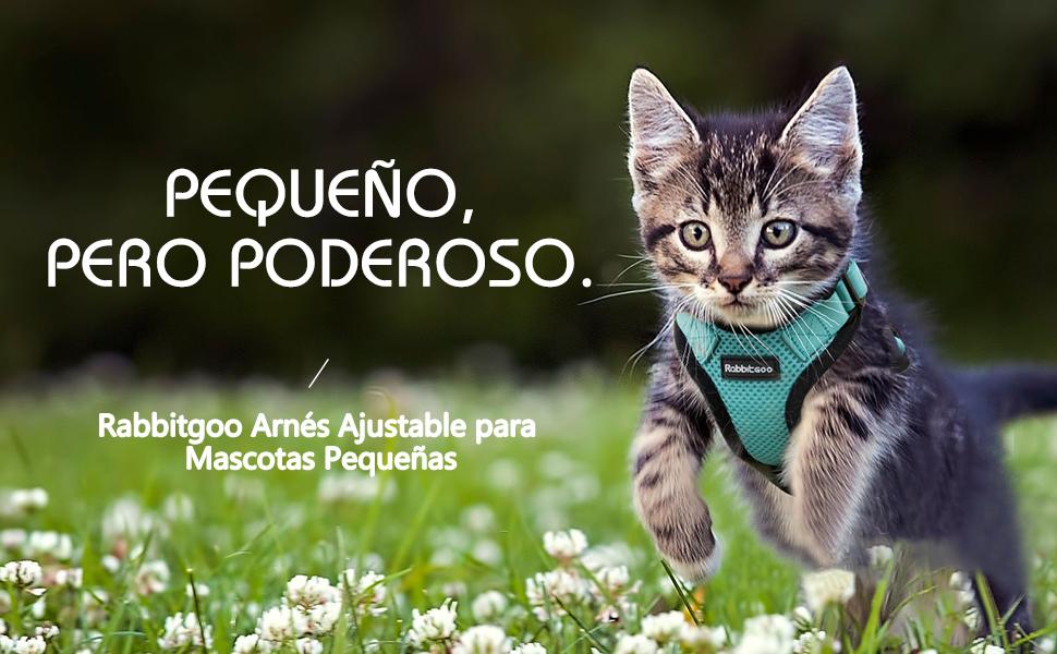rabbitgoo Arnés Gatos Arnés Perro Chihuahua Chaleco Acolchado ...