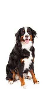 joint pain relief dogs canines mobility joints relaxation sleep aid arthritis non addictive movement