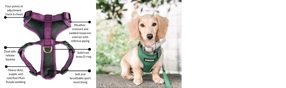 DJANGO Adventure Dog Harness in Forest Green - Comfortable, Lightweight, and Durable Dog Harness