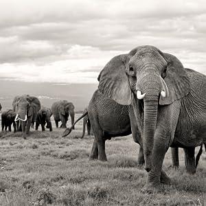 DR TUSK Save the elephants premium mens skin care line cruelty free