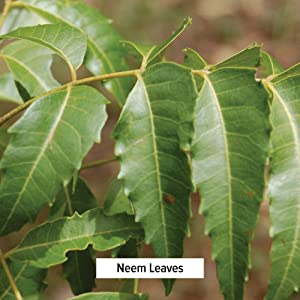 Banyan Botanicals neem leaves oil