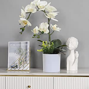 wihte orchid