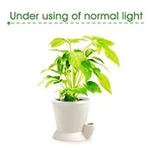 Under Using the normal Light