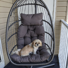 The dog loves this swing chair