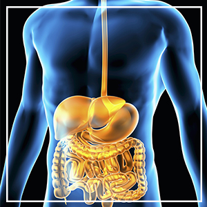improve digestion,boost immunity