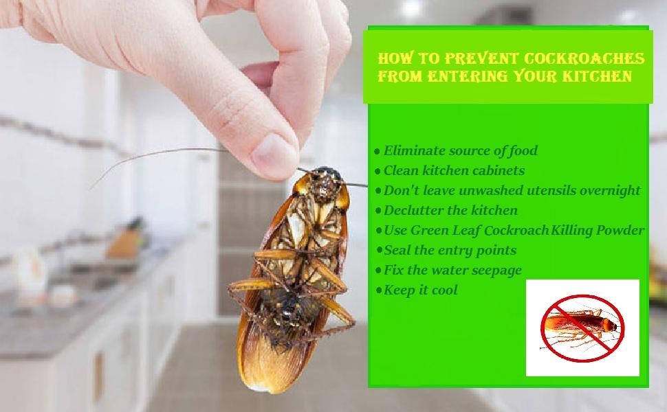 cockroach killer bait