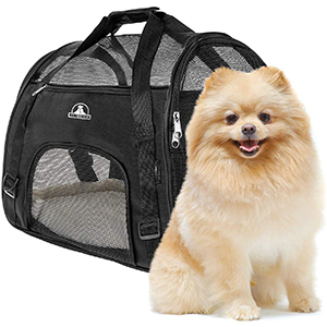 small dog beside pet union pet carrier