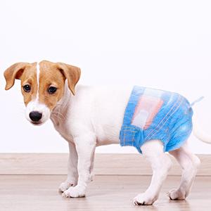 dog diaper2