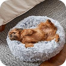 Bark Orthopedic Memory Foam Dog Bed