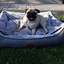 lit de chien en plein air