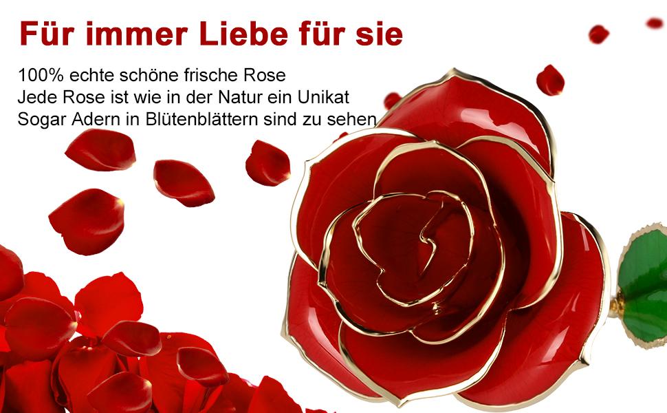 Ein Symbol für wahre Liebe - echte Rosenblätter, echte Rosenblätter, echtes 24k Gold getaucht.