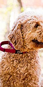 dogIDS Nylon Martingale Dog Collar with Personalized Quick Release Buckle - Made in The USA