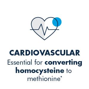 Cardiovascular Support